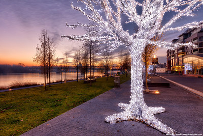 Light tree at the sunset