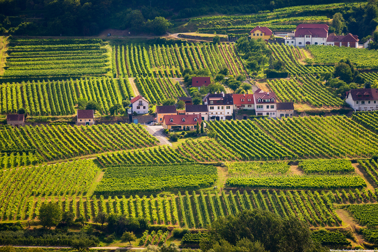 Vineyards in Austria