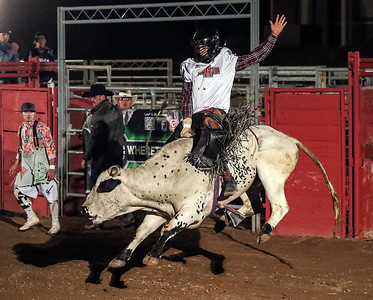 A rider wearing the jersey of Arkansas State takes his shot during a rodeo at Old Tucson Thursday, Dec 27, 2018.  Riders wearing jerseys of the two teams try to score points by staying on the bull the longest.
