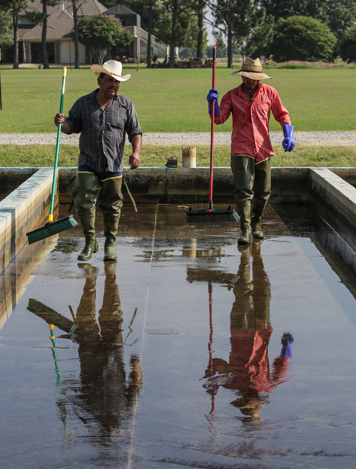 Workers finish cleaning the spawning area.  Pool Fisheries are the exclusive supplier to more than 1,000 stores in the Petsmart chain, and — via wholesalers — they supply the vast majority of the fish found at big retailers like Walmart.