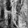 Tree Fork