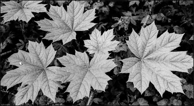 Arrangement of Leaves