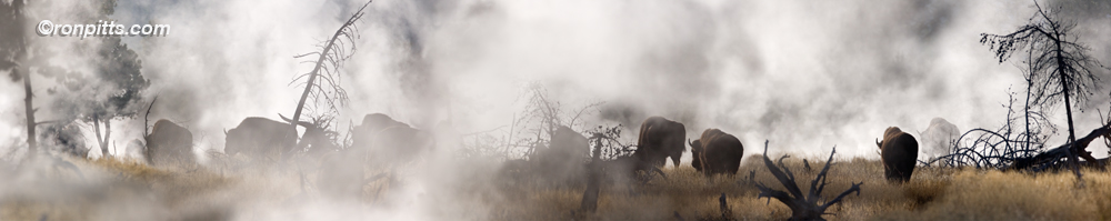 INTO THE MYSTIC It looked like a scene out of prehistoric times - huge, horned beasts ambling across a desolate landscape. As they grunted along, their clouds of breath mixed with the surrounding geyser plumes. The smell of sulfur from thermal springs filled the cold morning air. It was a small herd, moving steadily east. I followed them until the last silhouette disappeared into the mist.  Then they were gone and I realized I was standing alone in the middle of a cloud. I couldn't see them but I could hear their grunting. I thought it best to leave and worked my way back west toward open sky and present day.