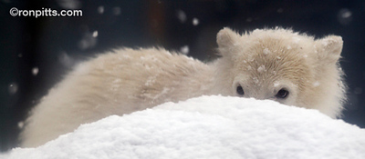 Polar Peeps