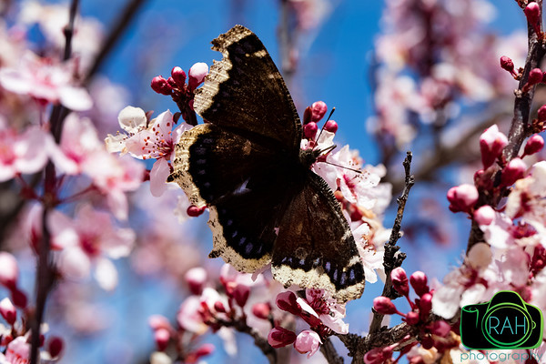 Butterfly on Easter 2016