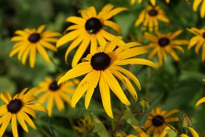 Ringwood NJ Botanical Gardens