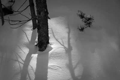 Shadows on new snow