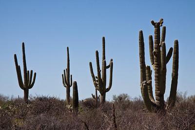 AZ Tucson
