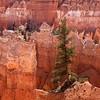 Bryce Canyon_4474