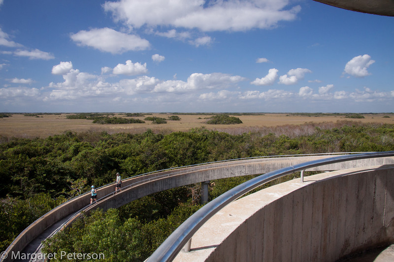 A high observation platform gave us a broad view over the sawgrass prairie and the tree hammocks.