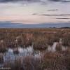 Moon rise in the sawgrass prairie.