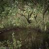 Wetlands pond