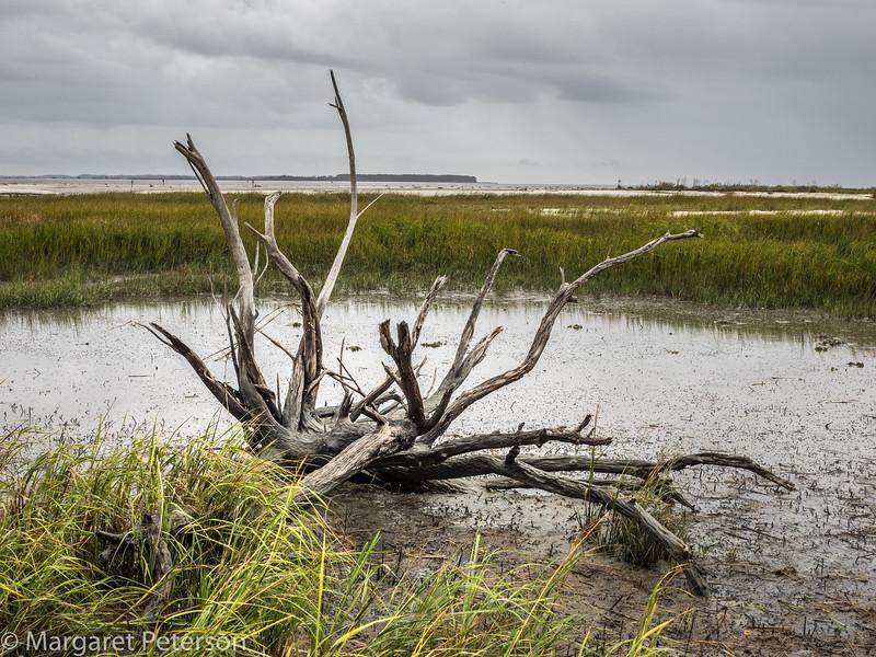 Marsh wetlands