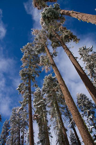 Yosemite National Park December 2008