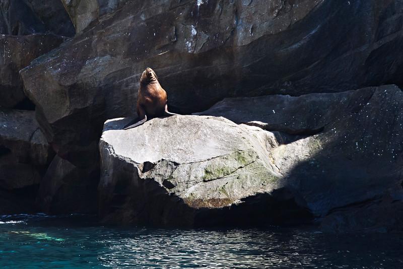 Sun-bathing Sea Lion