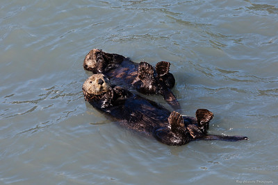 The Otter Couple