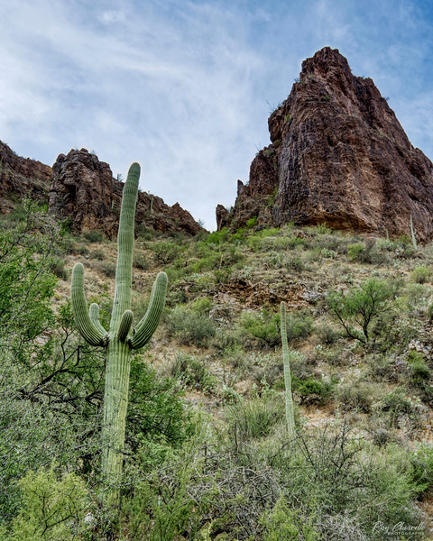 Ventana Canyon Trail