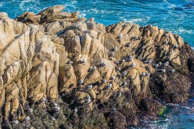 Seagulls on the Rocks