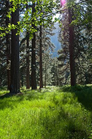 Yosemite Valley Meadow Side Light