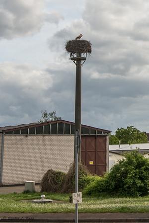 Common Town Storks Nest & Pole