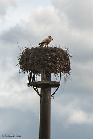 Storks Nest Close-Up