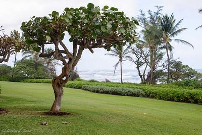 Tree & Surf