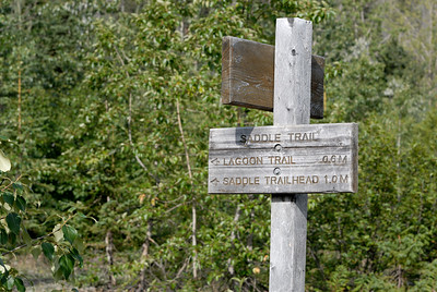 In Kachemak Bay State Park  the trails are well marked as seen by this trailside sign post.