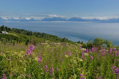 This photo  was taken just above Homer, Alaska as you drive Highway 1 towards the end of the road.  Looking down towards Homer Spit all I could see were clouds shrouding the south end of Cook Inlet.