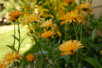 More flowers reaching for the sun in Anchorage's long summer days!