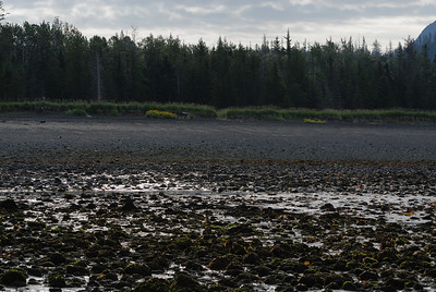 Mako's water taxi ((http://www.makoswatertaxi.com/) dropped Heather and I off at the beach at Kachemak Bay State Park at low tide.  We jumped off the bow of the boat into knee-high water and waded to shore where we prepared for our hike.  In this photo, you can see a orange sign on a tree that marks the start of the Glacier Lake trail. Our day hike took us 9 miles, around the mouth of a glacier, up a ridge and back to a beach 4 miles southwest on the coast from where we started.   Kachemak Bay State Park ((http://www.dnr.state.ak.us/parks/units/kbay/kbay.htm)  is Alaska's first state park containing ~ 400,000 acres of wilderness, glaciers, forests and ocean!  It truely is a wilderness experience.