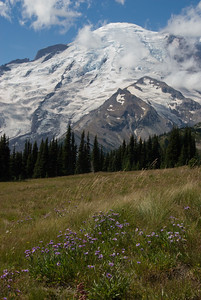 Mount Rainier from Sunrise.   The summer flowers are all dying off, but here an there are patches of these small blue flowers.  In just a few months there will be only these fields covered in snow!  Let the snow-shoeing season begin!