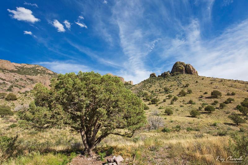 Bar Canyon Trail