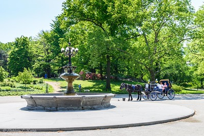 Charry Hill Fountain & Horse Drawn Carriage