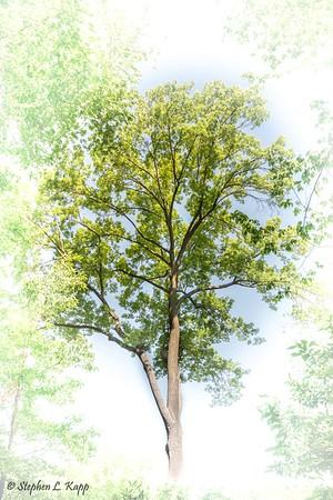 Tree - Central Park-2