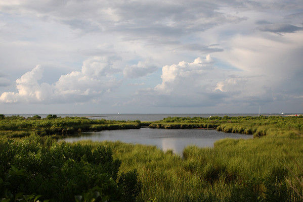 ...which opens up to John Butler's mud hole on the left, with Eel Pond and Nantucket Sound beyond. This pond is a favorite nesting place for swans and ducks and other waterfowl.