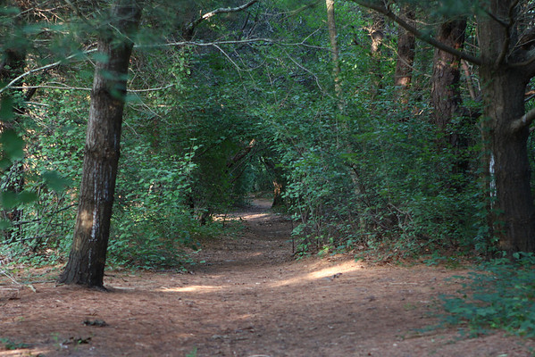 First, we take the woods trail...
