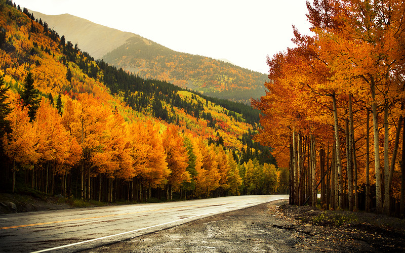 Autumn Road (Gunnison, CO)