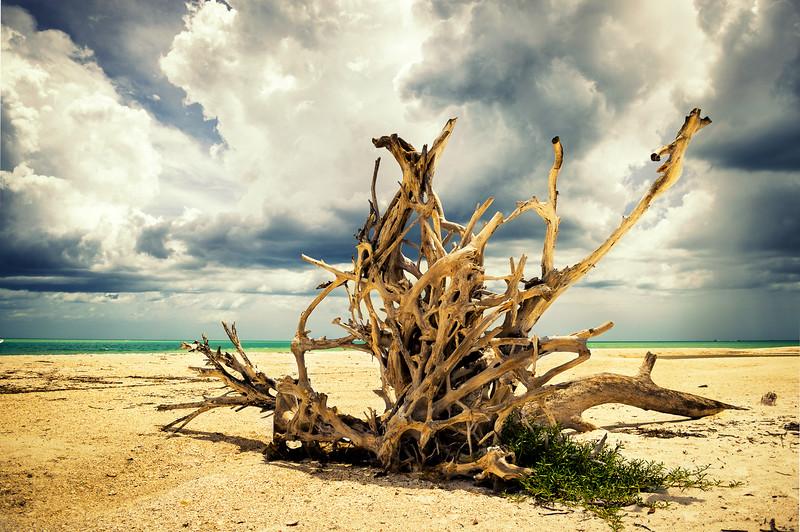 Beach Trunk