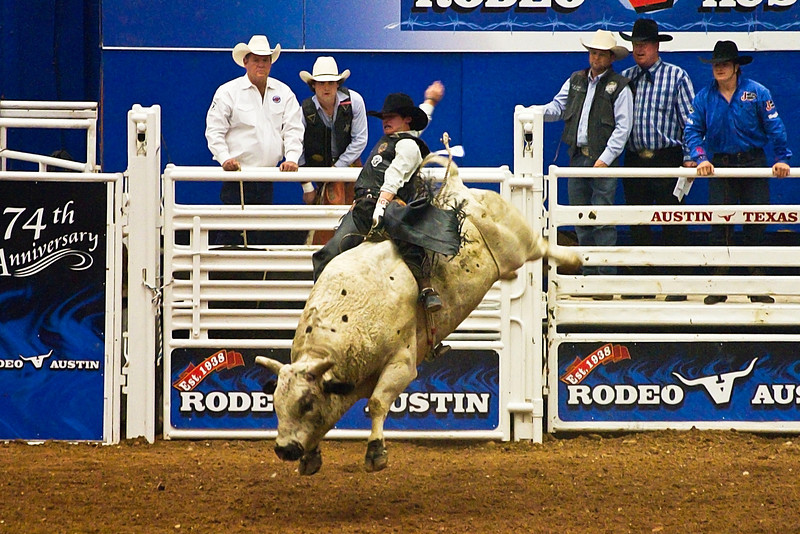 White Bulls Can Jump