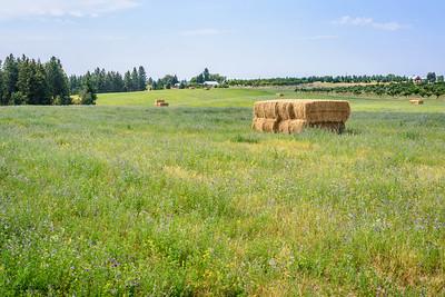 Green Bluff Farm, NE of Spokane, WA