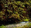 Stream and ferns in Muir Woods