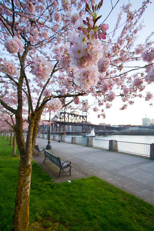 Perfect Portland Morning