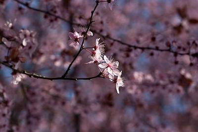 Part Blossom