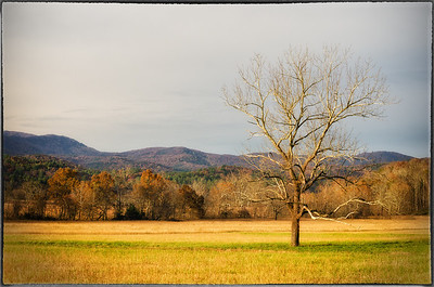 Classic fall color in Cades Cove, Tennessee