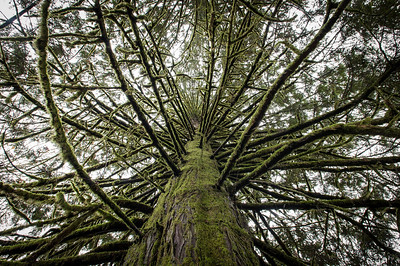 Branches - CliffFalls