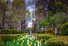 Washington Square Flowers