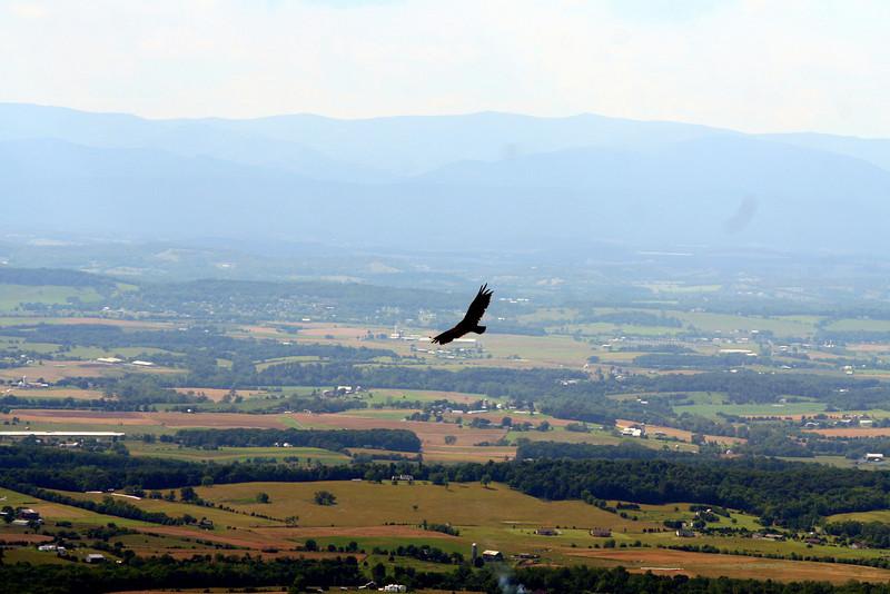 Blue Ridge, June '09