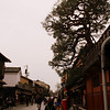 Tree on the roof<br /> Kyoto, Japan