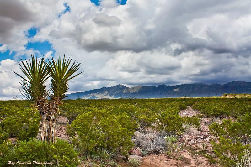 Chihuahuan Desert<br /> El Paso, Texas