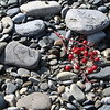 Ashberry on the rocks<br /> Sochi, Russia
